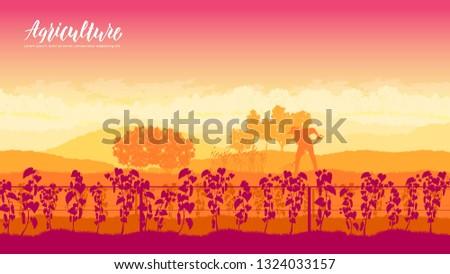 Vegetal jardinagem folheto cartões conjunto Foto stock © Linetale