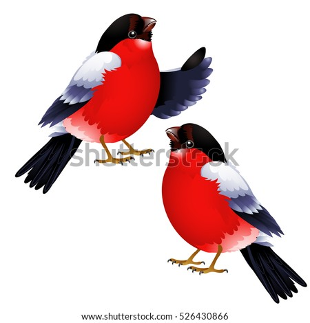 Two bullfinch isolated on white background. Vector cartoon close-up illustration. Stock photo © Lady-Luck