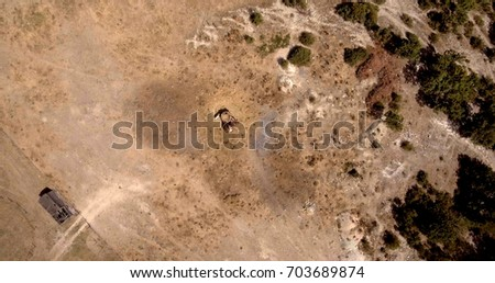 Aerial view from drone horse farm with animals eating hay from a wooden box on a sunny day. Stock photo © artjazz
