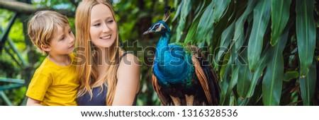 павлин · глаза · красоту · птица · синий · цвета - Сток-фото © galitskaya