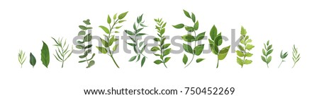 collection forest fern art foliage natural leaves herbs in line style. Decorative beauty elegant ill Stock photo © MarySan