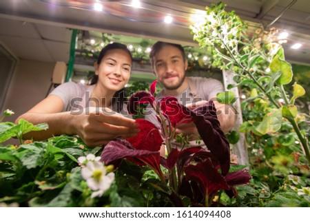 Stockfoto: Kleine · groep · jonge · boeren · tuin · bed
