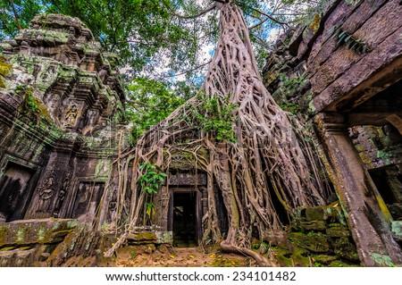 древних каменные двери дерево корней храма Сток-фото © dmitry_rukhlenko