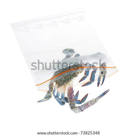 Keep your crab longer life and fresh by putting in the refrigera Stock photo © JohnKasawa