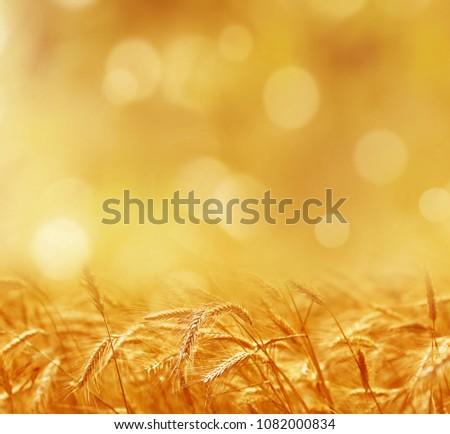Wheat ears on a blurred background. Stock photo © Leonardi