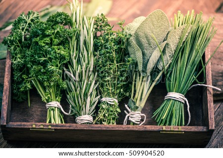 various fresh herbs, rosemary, thyme, mint and sage on wooden background Stock photo © yelenayemchuk