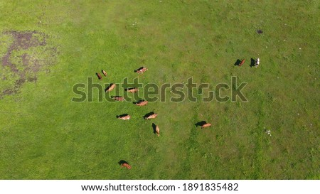 Green field with grazing cows. Aerial background of country land Stock photo © vlad_star