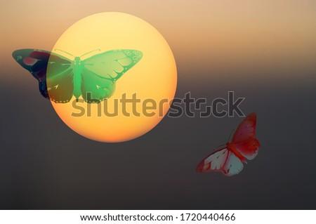 Fantastisch landschap abstract natuur ongebruikelijk zonsondergang Stockfoto © popaukropa