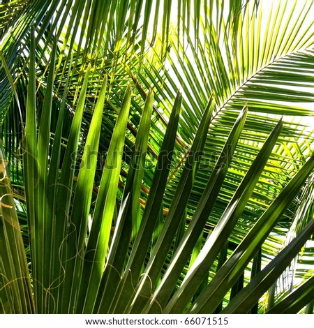 Kokosowe · szkła · jar - zdjęcia stock © artjazz