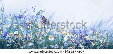 dobrar · tulipas · colorido · flores · jardim · holandês - foto stock © neirfy