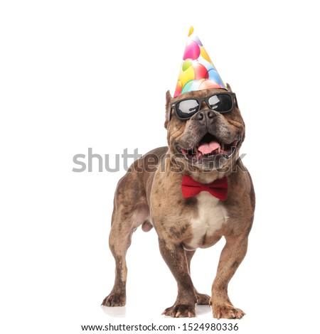 kutya · születésnapi · buli · kalap · léggömbök · ül · kutyakölyök - stock fotó © feedough