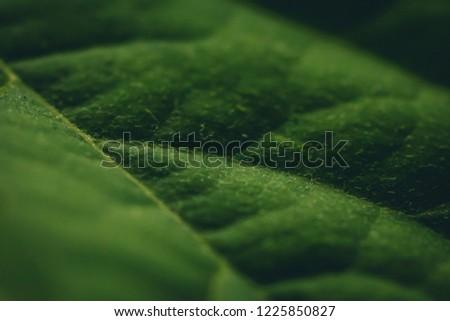 Közelkép friss zöld bokor páfrányok körül Stock fotó © artjazz