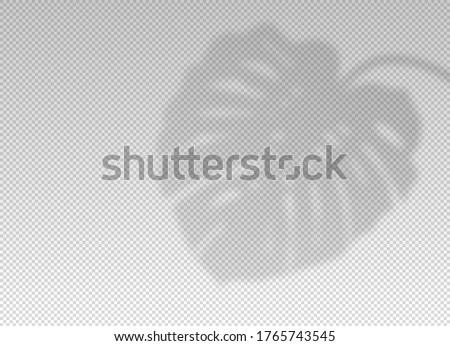 Сток-фото: лет · плакат · тропические · цветы · листьев · прозрачный