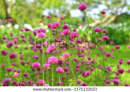 Fogos de artifício flor belo rosa pequeno jardim de flores Foto stock © galitskaya