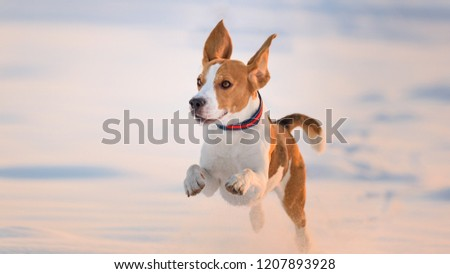 dog running on snow covered fields Stock photo © meinzahn
