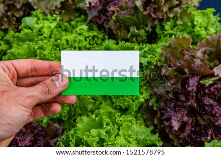 Agricultural Farmer Holding Blank Business Card in Sunflower Fie Stock photo © stevanovicigor