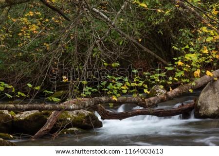 jesienią · liści · zielone · mech · drzewo · trawy - zdjęcia stock © joningall