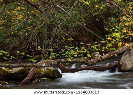 Stream rotsen gedekt bos water Stockfoto © Joningall