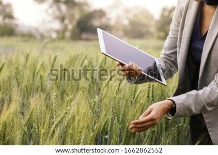 zöld · búza · fej · megművelt · mezőgazdasági · mező - stock fotó © stevanovicigor