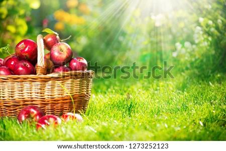 kırmızı · sağlıklı · organik · elma · sepet · yeşil · ot - stok fotoğraf © yelenayemchuk