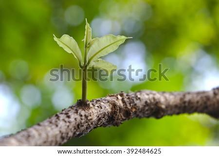 vinha · novo · uva · jovem · primavera - foto stock © FreeProd