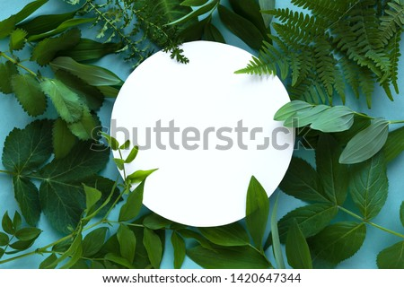 Creative foliage background of green leaf ferns on blue background with reflection of shadows and co Stock photo © artjazz