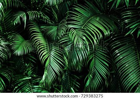 Lata sprzedaży banner plakat liści palmowych dżungli Zdjęcia stock © ikopylov