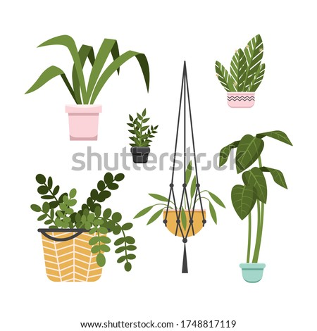 Different green succulent plants with flowers icon set isolated, cactus party, hola, vector illustra Stock photo © MarySan