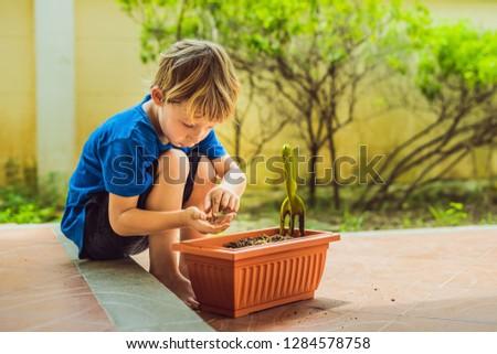 Weinig cute jongen zaden bloempot tuin Stockfoto © galitskaya