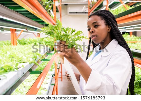 Young African woman in whitecoat holding one of green seedlings during work Stock photo © pressmaster