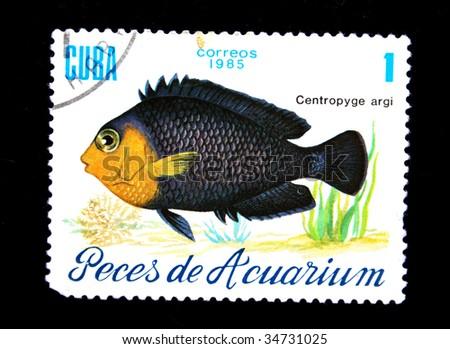 CUBA-CIRCA 1985: A stamp printed in Cuba shows fish Chaetodon ocellatus, circa 1985 Stock photo © Zhukow