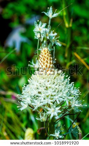 Indian Paintbrush White Heather Mount Rainier Sunrise Wildflower Stock photo © billperry