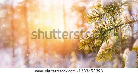 frozen pine branches stock photo © smuki