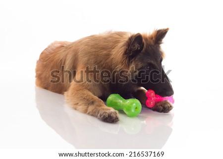 Köpek yavrusu köpek altı ay eski oturma Stok fotoğraf © AvHeertum