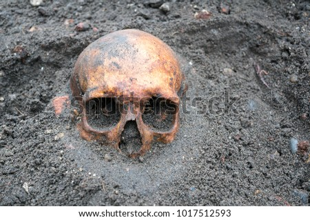 archaeological excavation with skull still half buried in the ground stock photo © klinker