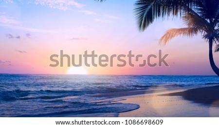 naplemente · Karib · tenger · Barbados · fa · tájkép - stock fotó © konstanttin