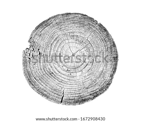 Large circular piece of wood cross section with tree ring textur Stock photo © boggy