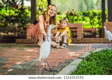 Mom and son are looking at Little Egret Cattle egret Bubulcus ib Stock photo © galitskaya