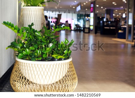 perspective of the passage at trade centre focus on the plant stock photo © dashapetrenko