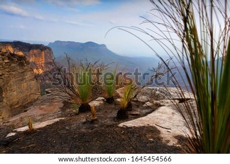 Fuego hierba árboles meseta azul valle Foto stock © lovleah