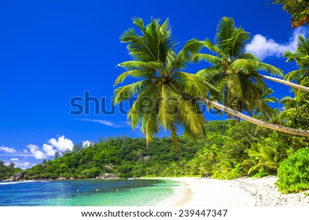 Picturesque landscape with a coconut palm tree, rocks and hills. Travel destination in southern coun Stock photo © Lady-Luck