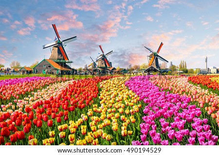 Windmills at Zaanse Schans in Holland on sunset. Zaandam, Nether Stock photo © dmitry_rukhlenko