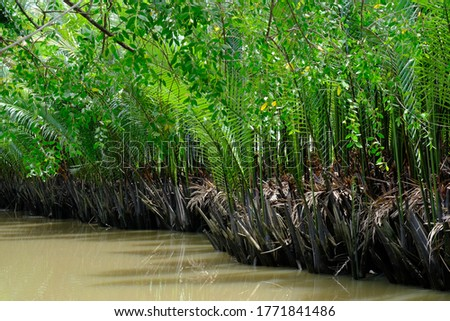 Tropische planten groeiend bank kanaal centrum Stockfoto © meinzahn