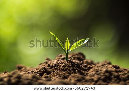 завода · дерево · природного · кофе · саженцы · природы - Сток-фото © artrachen