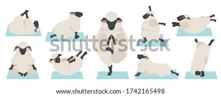 Sheep yoga. Ewe Farm Animal yogi isolated. Relaxation and medita Stock photo © popaukropa
