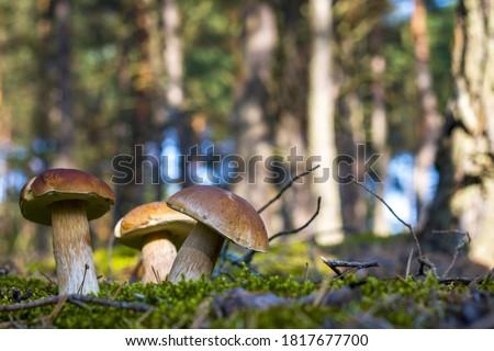 Grande verano madera setas creciente sol Foto stock © romvo