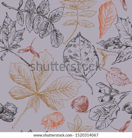 Najaar illustratie kleurrijk bladeren kastanje vintage Stockfoto © articular
