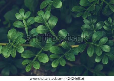 マクロ 写真 暗い 緑 自然 葉 ストックフォト © artjazz