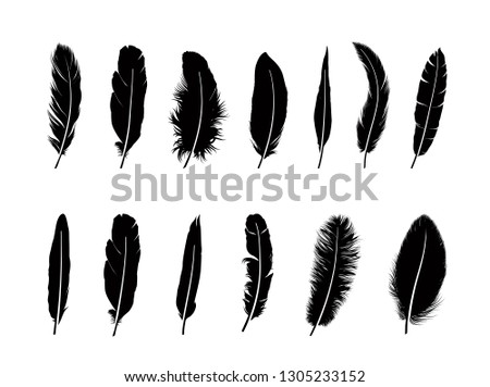 feather set different birds feathers silhouette icons over wh stock photo © terriana