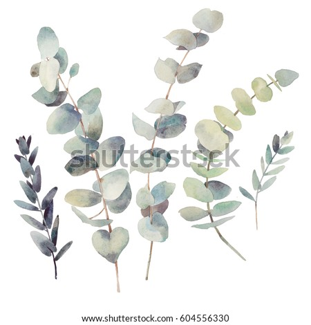 watercolor modern decorative element set eucalyptus round green leaf wreath greenery branches gar stock photo © bonnie_cocos